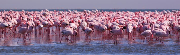 Flamingoes in Walvis Bay, Namibia