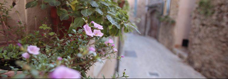 medu_esp_pmi_valldemossa-village-flower-street-4